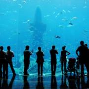 Aquarium in Atlantis Dubai