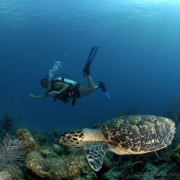 Diving - Scuba, Cayman Islands.